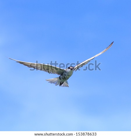 seagull in the bright blue sky