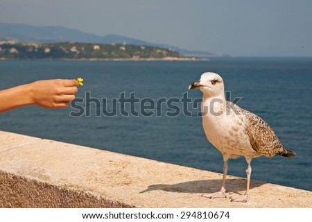 Seagull in the city. woman and seagull  - stock photo