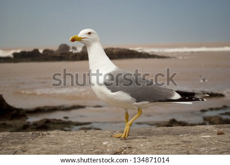Seagull in the port - stock photo