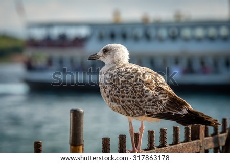Seagull in the port of Burgaz island, Turkey - stock photo