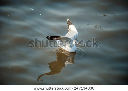 Seagull in the sea, Thailand - stock photo