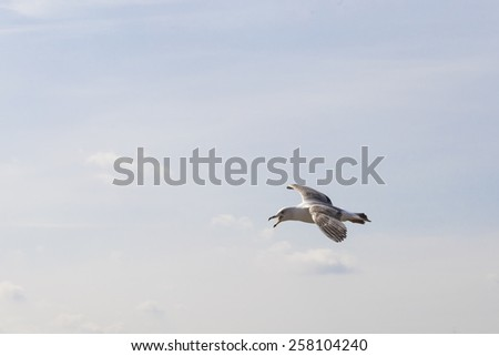Seagull in the sky - stock photo