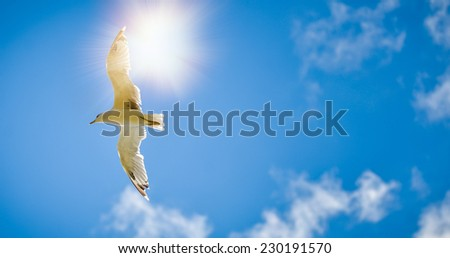 Seagull is flying and soaring in the blue sky with clouds - stock photo