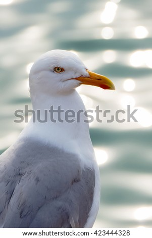 Seagull looking out over a glistening sea.
