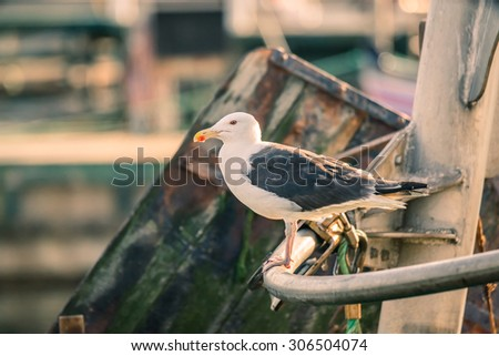 Seagull on a boat in a harbor at summertime