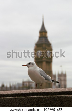 Seagull on a bridge in London