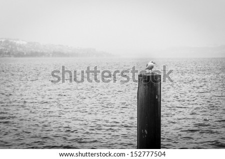 Seagull on a pole in winter.