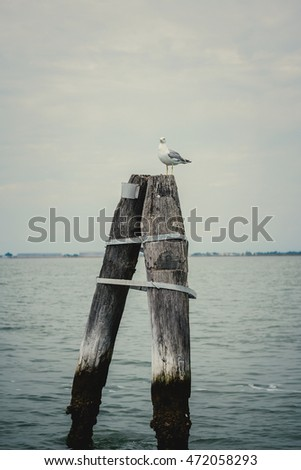 Seagull on a wood post. Venice, Italy.