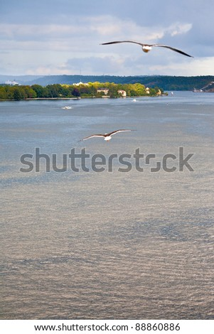 seagull on Baltic sea shore near Stockholm, Sweden - stock photo