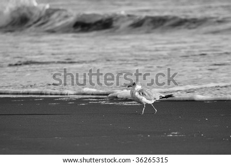 Seagull on beach - stock photo