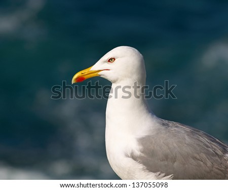 Seagull on cliff close-up
