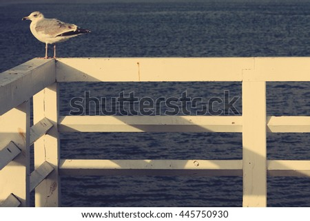 Seagull on railing over sea water background. Close up. Copy-space. Outdoor shot