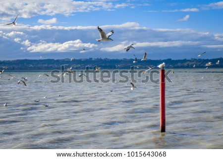 Seagull on red stake, Rotorua lake landscape, New Zealand