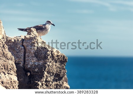 Seagull on rock with deep blue sea in the background - stock photo