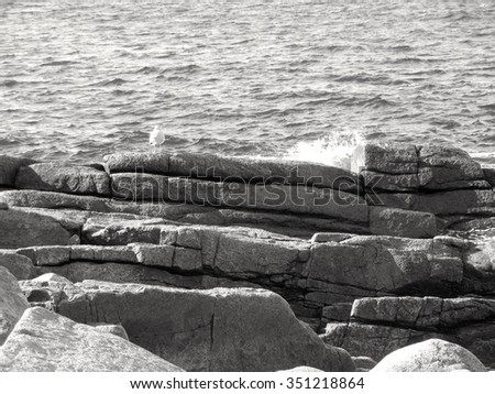 Seagull On Rocks by the Water at Halibut Point State Park in Rockport, Massachusetts - stock photo