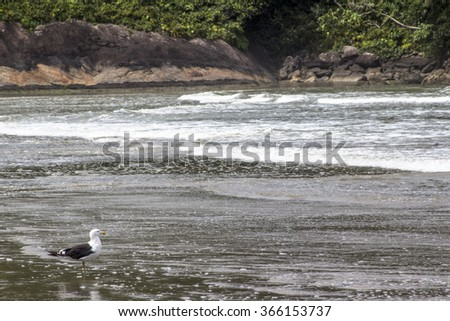 Seagull on the beach of Peruibe in south coast of Sao Paulo state