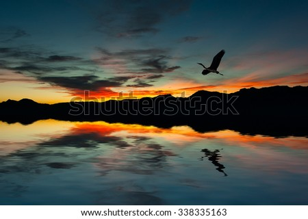 Seagull on the island with warm colors of sunset