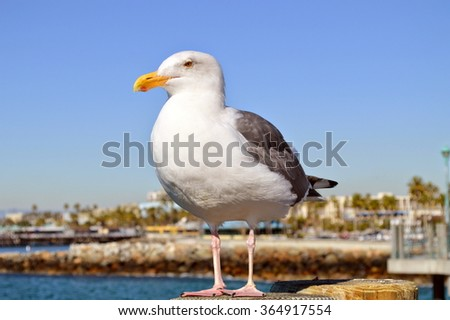Seagull on the pier. - stock photo