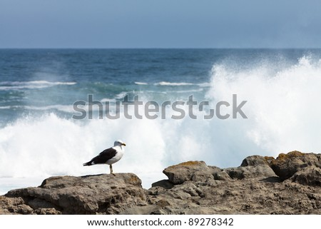 Seagull on the rocks of a rough coastline - stock photo