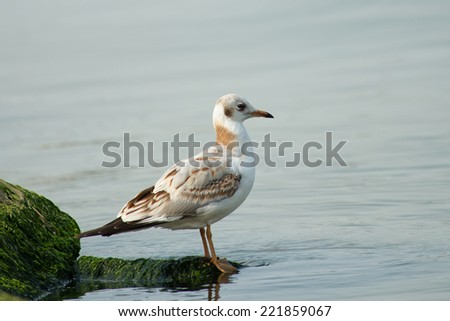 seagull on the seashore