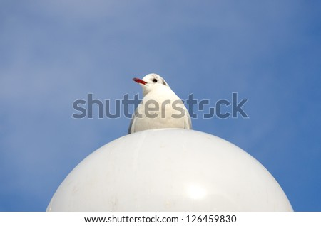 seagull on white ball of a street lamp - stock photo