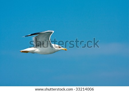 Seagull over blue sky