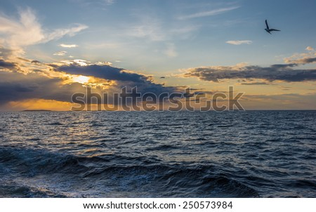 Seagull over the sea at sunset. Big Solovetsky (Solovki) Island, Russia.