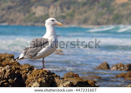 Seagull Perched on Barnacles
