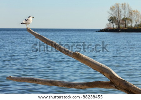 Seagull perched on old tree - stock photo