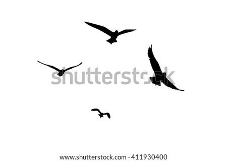 seagull silhouette on white background. - stock photo