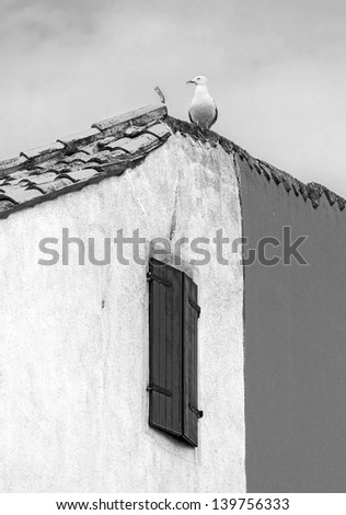 Seagull sits at the roof of the vinetian picturesque house - Venice, Italy (black and white)