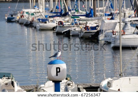 Seagull sitting at yacht harbor in Brest, Brittany in France