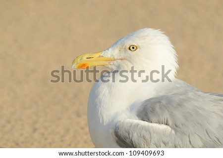 seagull sitting on the beach