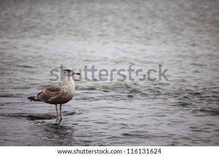 seagull sitting place outdoor nature - stock photo