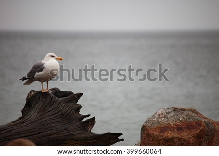 seagull sitting place outdoor nature