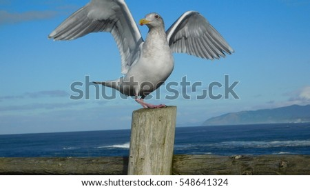 Seagull so cool