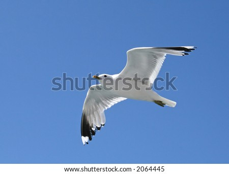 Seagull soaring in the blue sky - stock photo