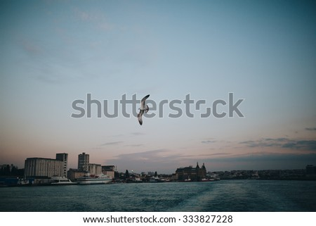 seagull soars in the sky over the sea bay on the background of the city of Istanbul at sunset - stock photo