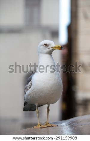 Seagull standin on an urban background. Cityscape. White bird standing in the city. - stock photo