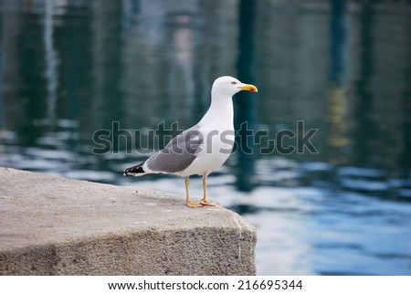 Seagull standing in the harbor - stock photo