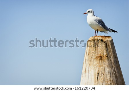 seagull standing on a tree trunk at a lake - stock photo