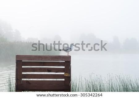 Seagull standing on wooden pier, sunrise mist over lake on background - stock photo