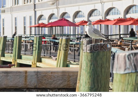 Seagull standing on wooden post at pier with restaurant and people on backgorund - stock photo