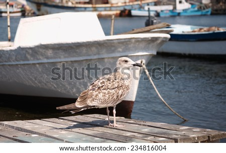 Seagull stayed on the pier against the boat  - stock photo