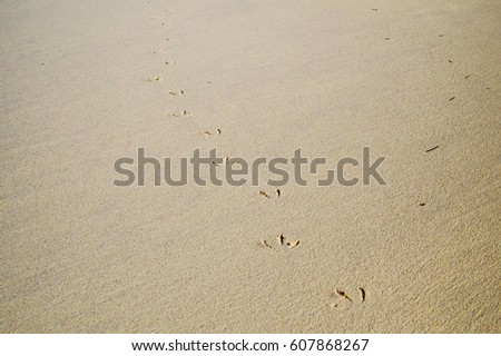 Seagull steps on the sand of a tropical beach