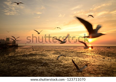 Seagull sunset background.