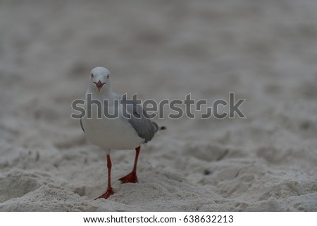 Seagull walking on the sand beach