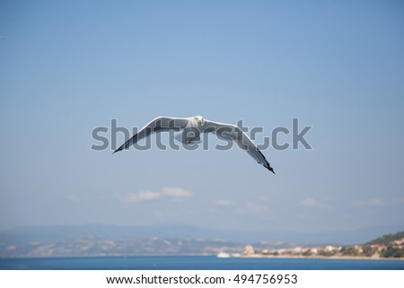 Seagull With Gray Mantle In Flight Blur Sea Background