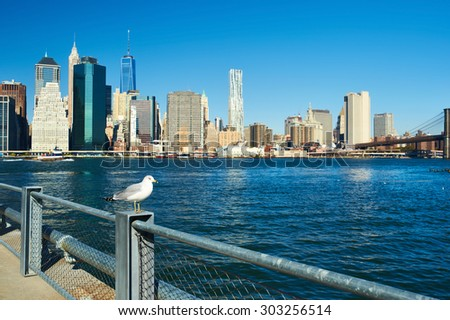 Seagull with Manhattan skyline in background, New York City. Focus on the bird.  - stock photo