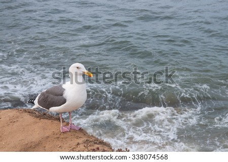 Seagull with ocean background - stock photo